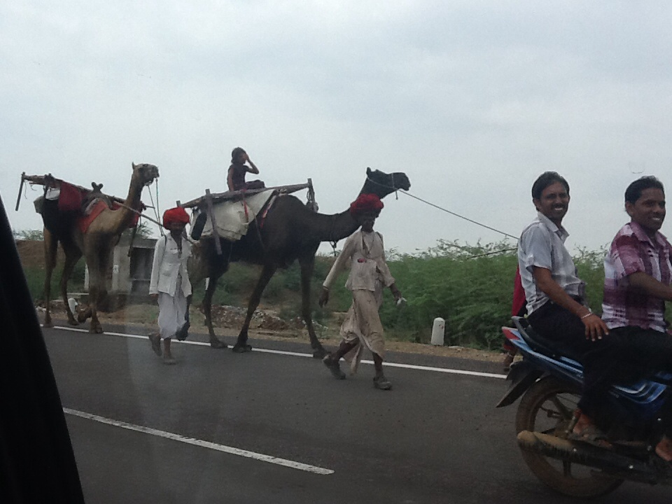 A herd of camels on the road to Udaipur