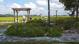 View from Sapelo's post office.