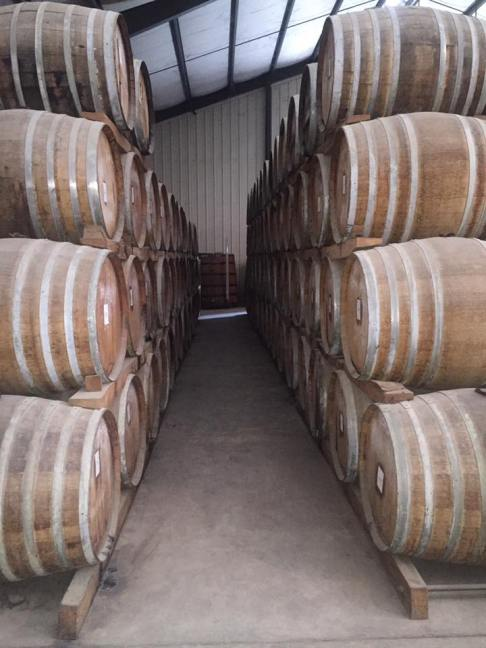 Barrels of rum in the aging process.