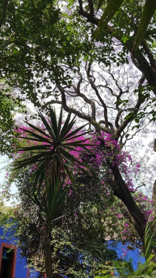 Looking skyward from Casa Azul's back yard oasis