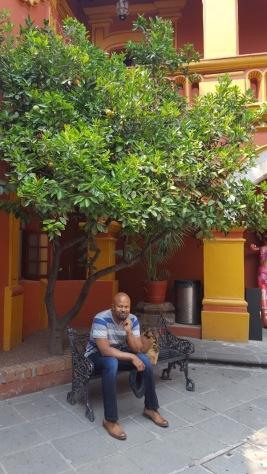 T, under a lemon tree.